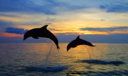 Bottlenose dolphins Wallpaper