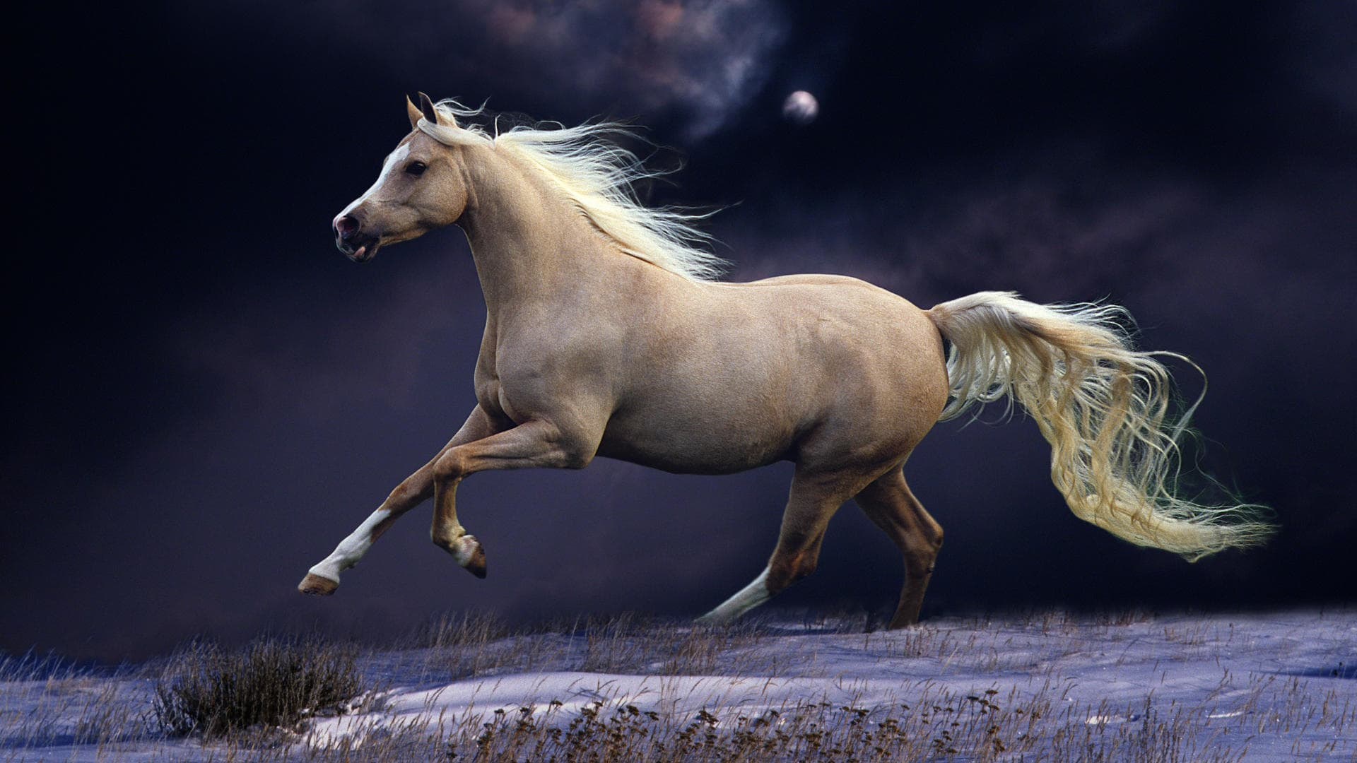 Horse Backgrounds Horse Wallpaper