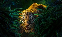 The Jungle Book full hd wallpapers