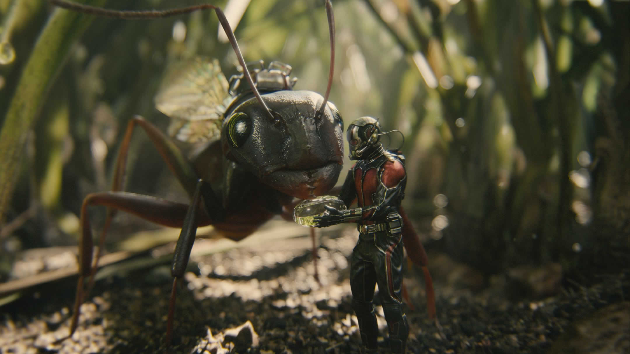 Ant-Man HD pictures