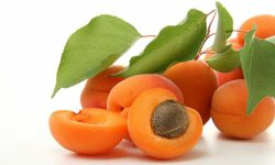 Apricot HD pictures