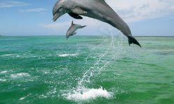Bottlenose dolphins HD pictures
