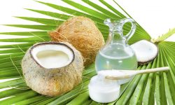 Coconut HD pictures