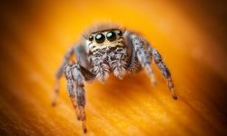 Jumping spider HD pictures