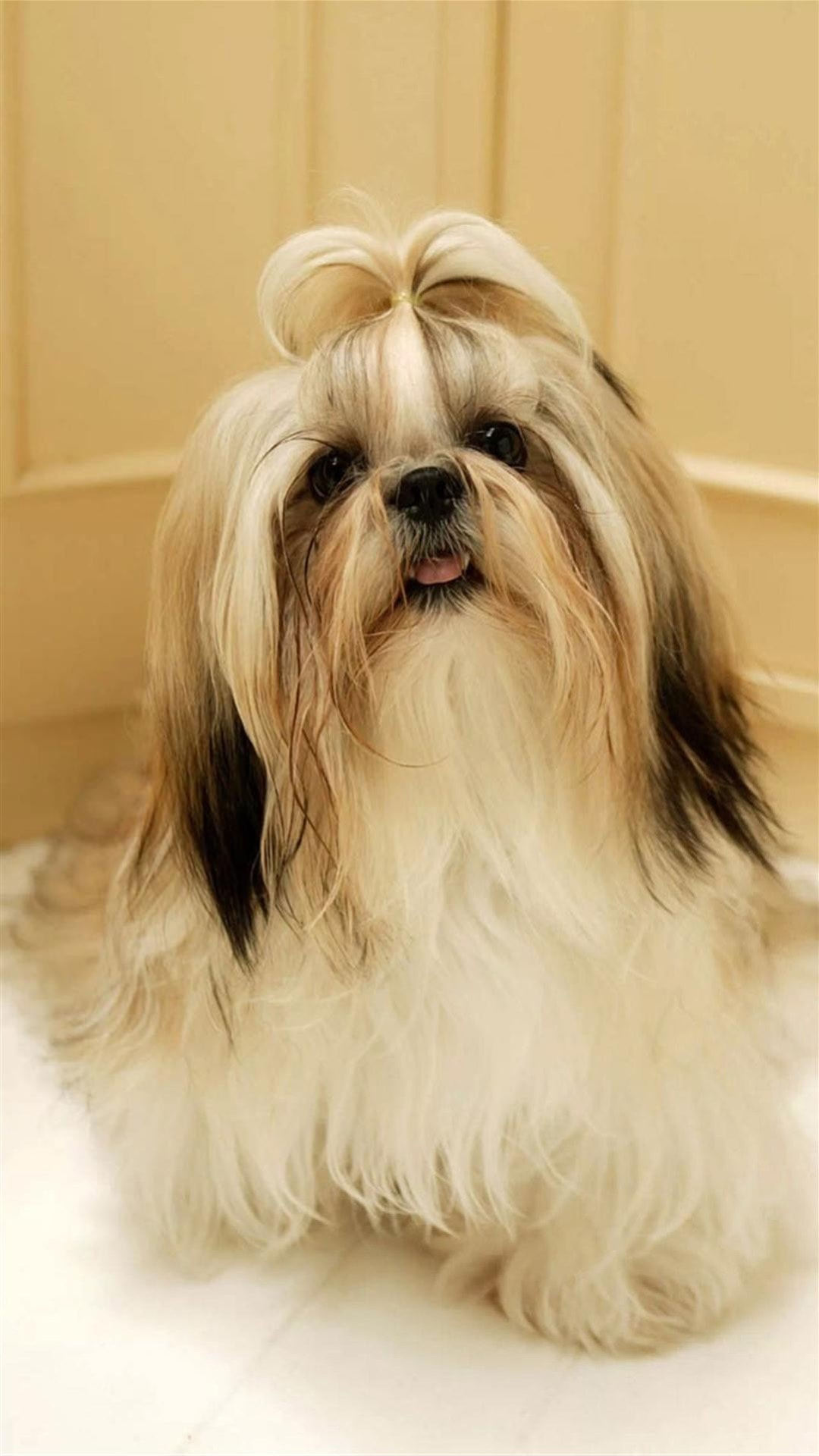 Shih Tzu For mobile