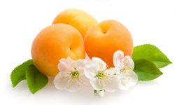 Apricot full hd wallpapers