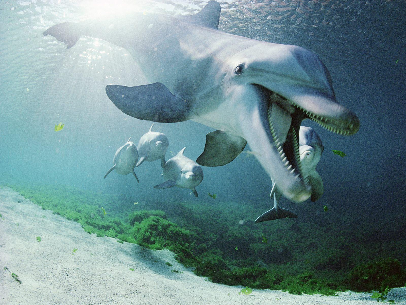 Bottlenose dolphins Full hd wallpapers