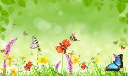 Butterfly Full hd wallpapers