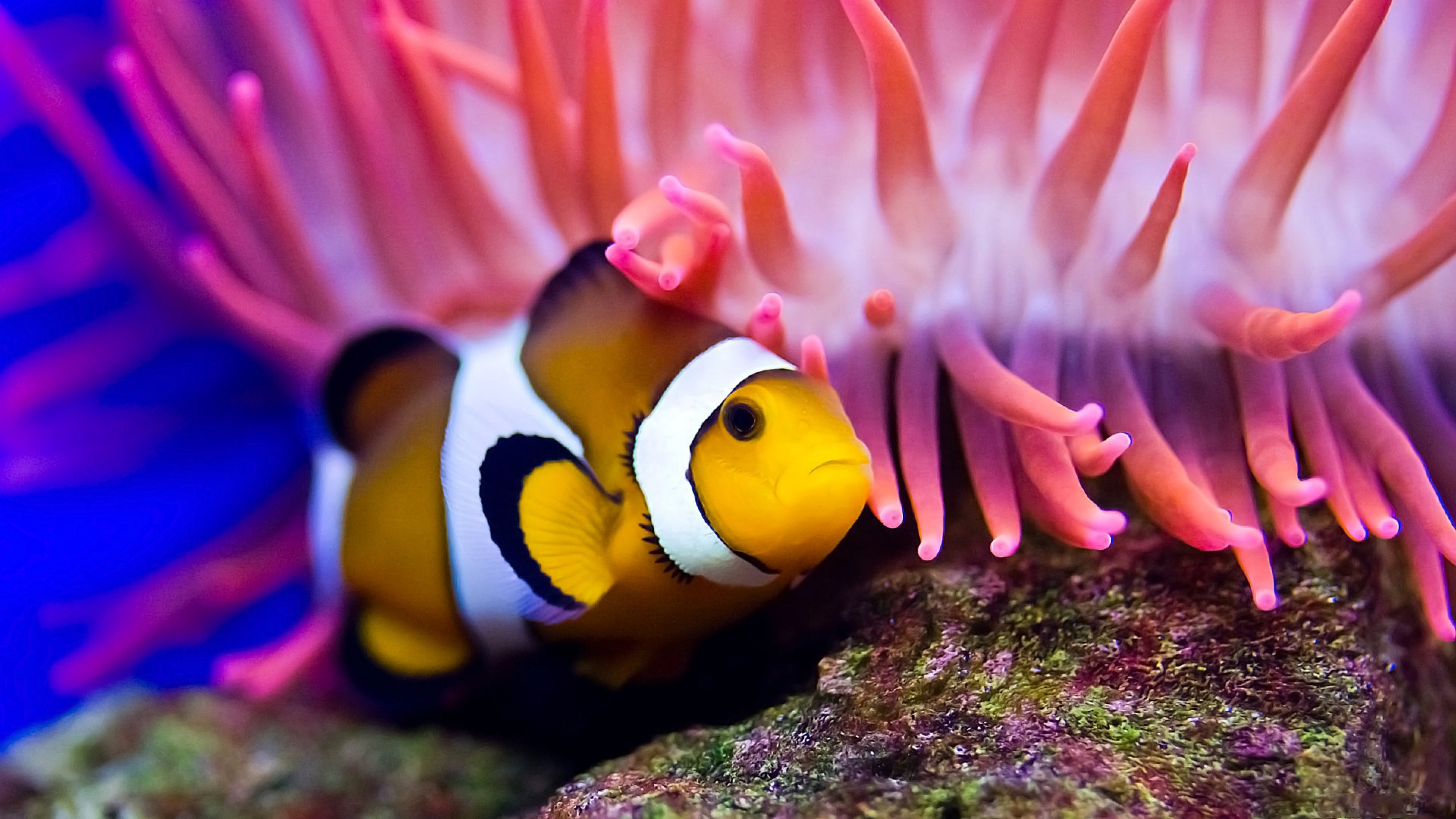 Clownfish download skype | Clownfish for Skype: The Online
