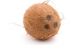 Coconut full hd wallpapers