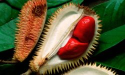 Durian full hd wallpapers