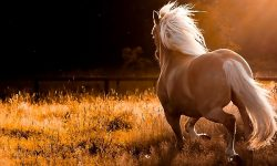 Horse Full hd wallpapers