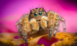 Jumping spider Full hd wallpapers