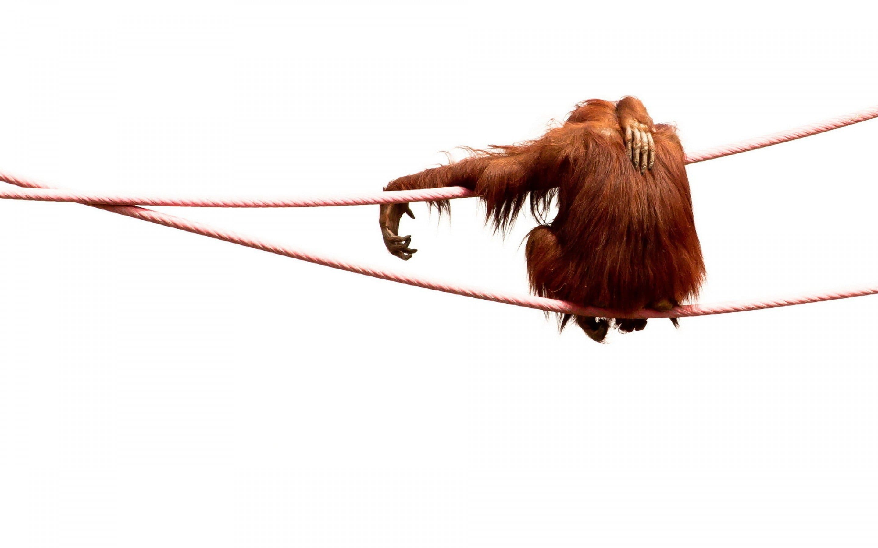 Orangutan for mobile
