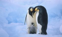 Penguin Full hd wallpapers