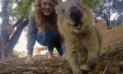 Quokka Full hd wallpapers
