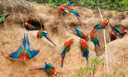Scarlet macaw Full hd wallpapers