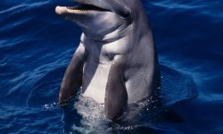 Bottlenose dolphins For mobile