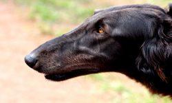 Greyhound Widescreen for desktop