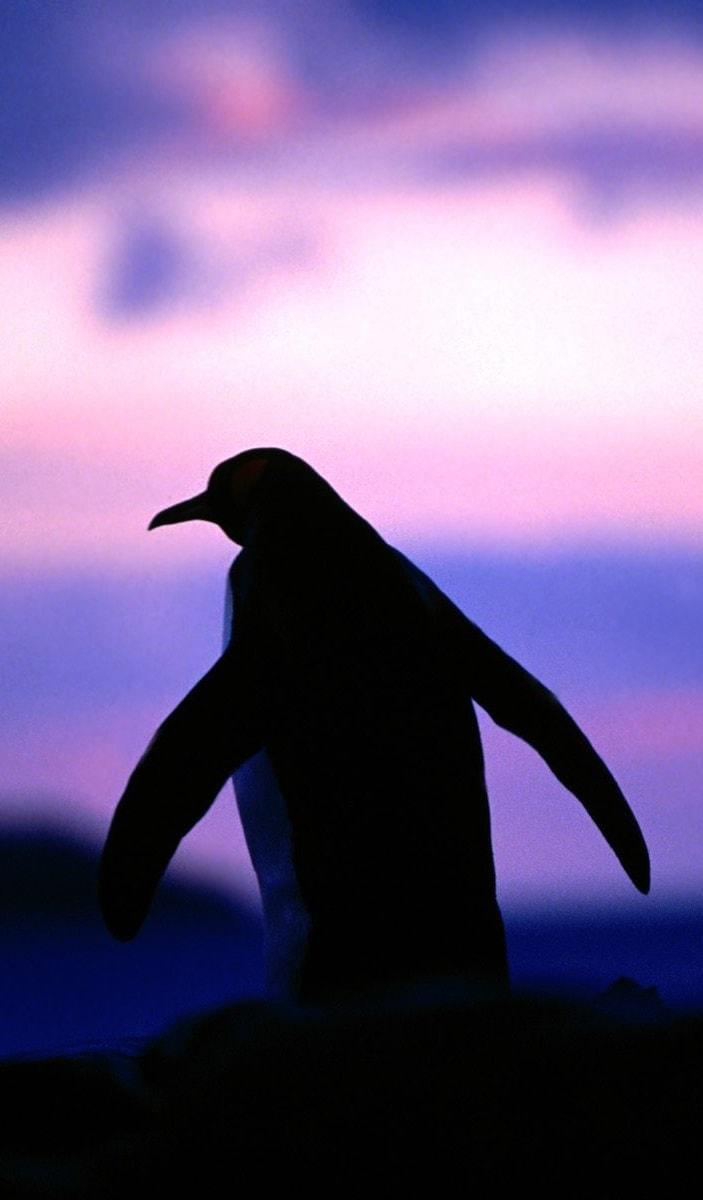 Penguin For mobile