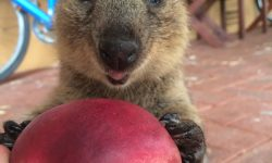 Quokka For mobile