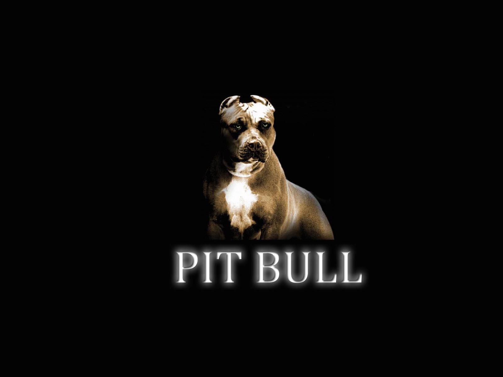 American Pit Bull Terrier Widescreen for desktop
