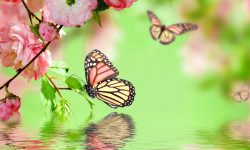 Butterfly Widescreen for desktop