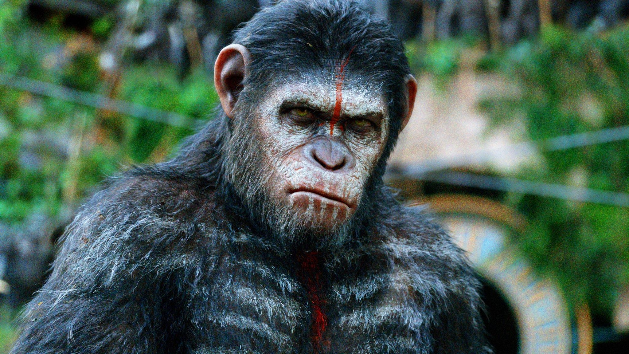Dawn of the Planet of the Apes Widescreen for desktop