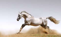 Horse Widescreen for desktop