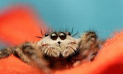 Jumping spider Widescreen for desktop