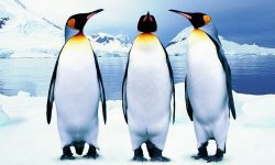 Penguin Widescreen for desktop