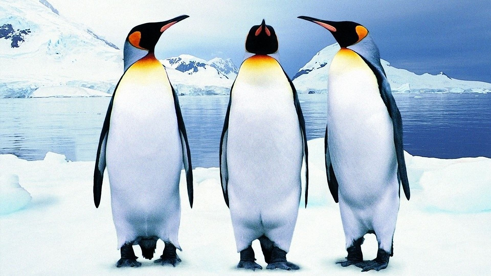 Penguin Widescreen for desktop