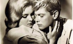 Troy Donahue Widescreen for desktop