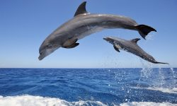 Bottlenose dolphins High