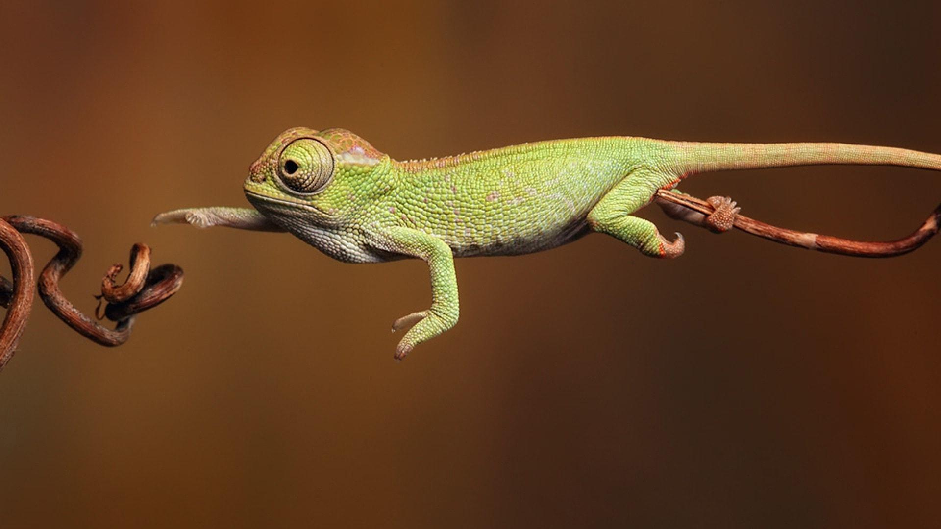 Chameleon High