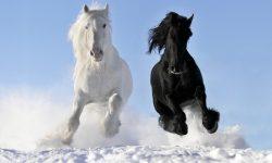 Horse High