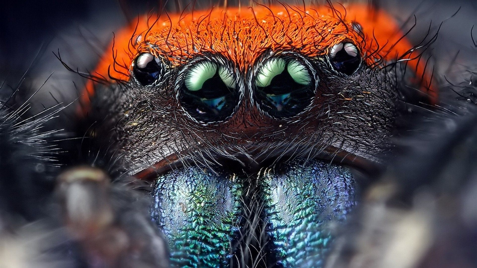 Jumping spider High
