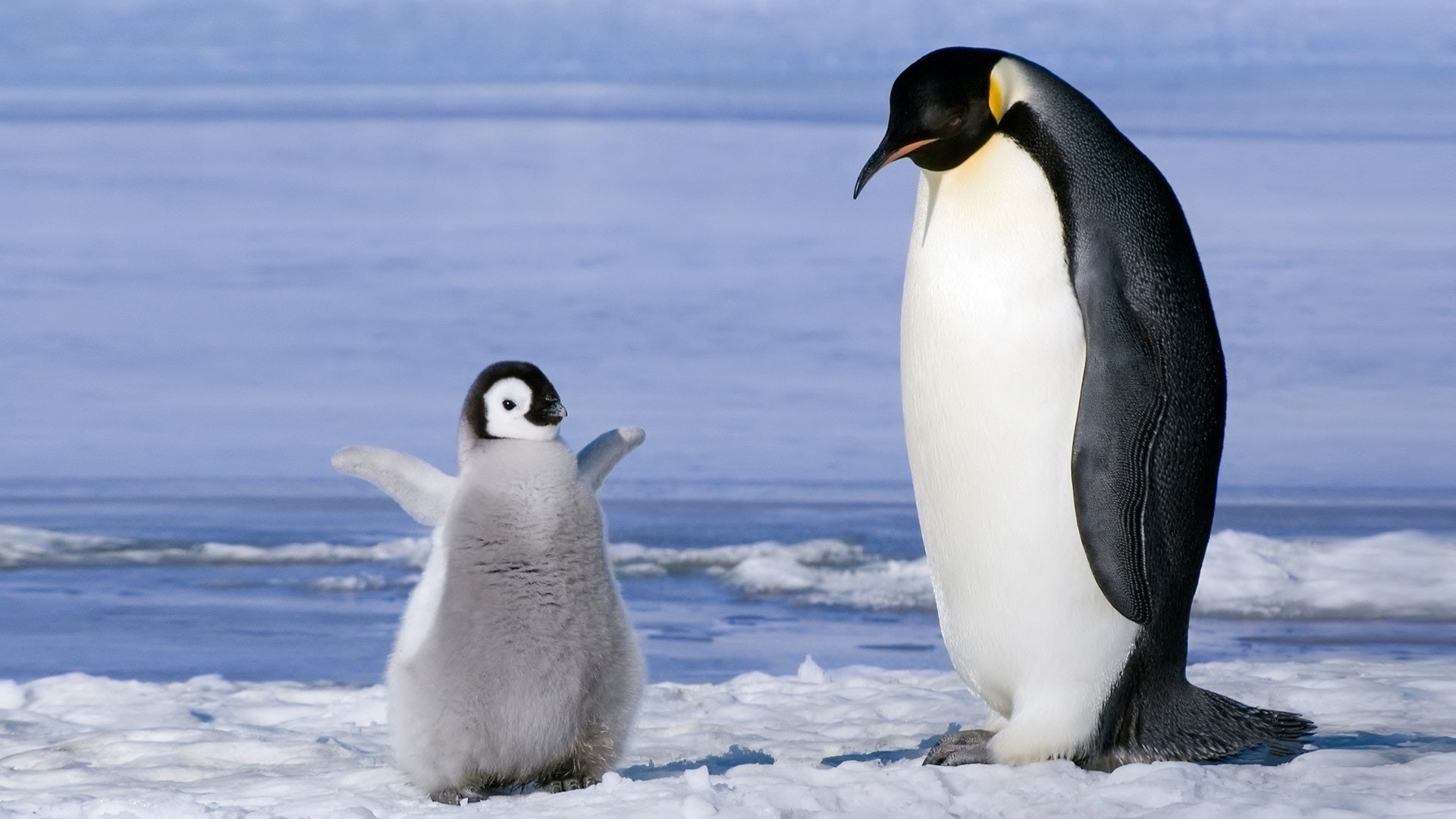 Penguin High