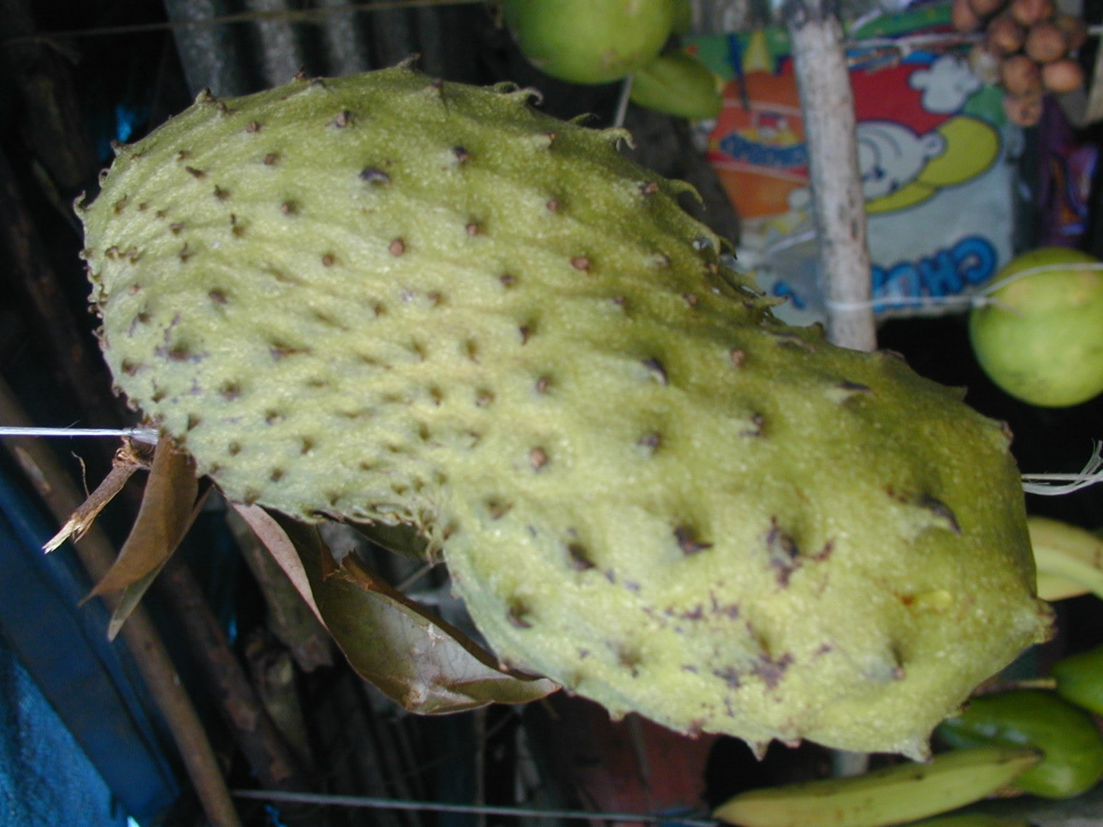 Soursop High