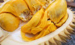 Durian HD