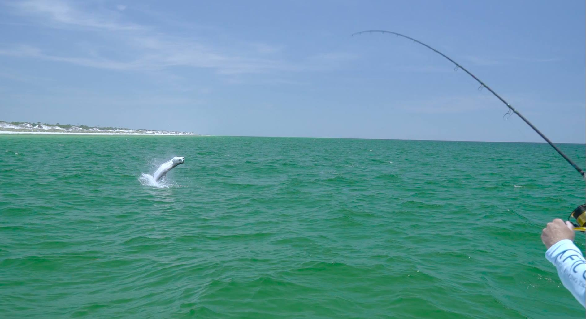 Fighting tarpon HD