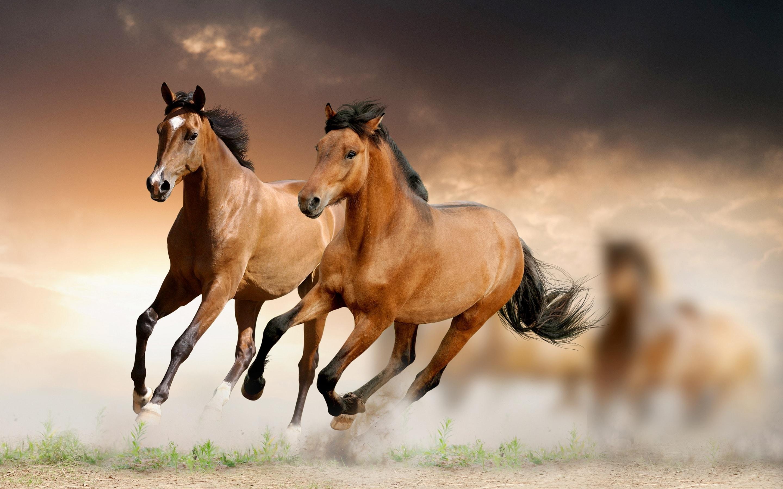 Horse HD