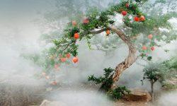 Pomegranate HD