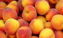 Apricot Free
