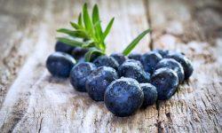 Blueberry Free