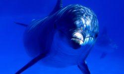 Bottlenose dolphins Free