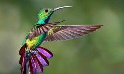 Colibri Free