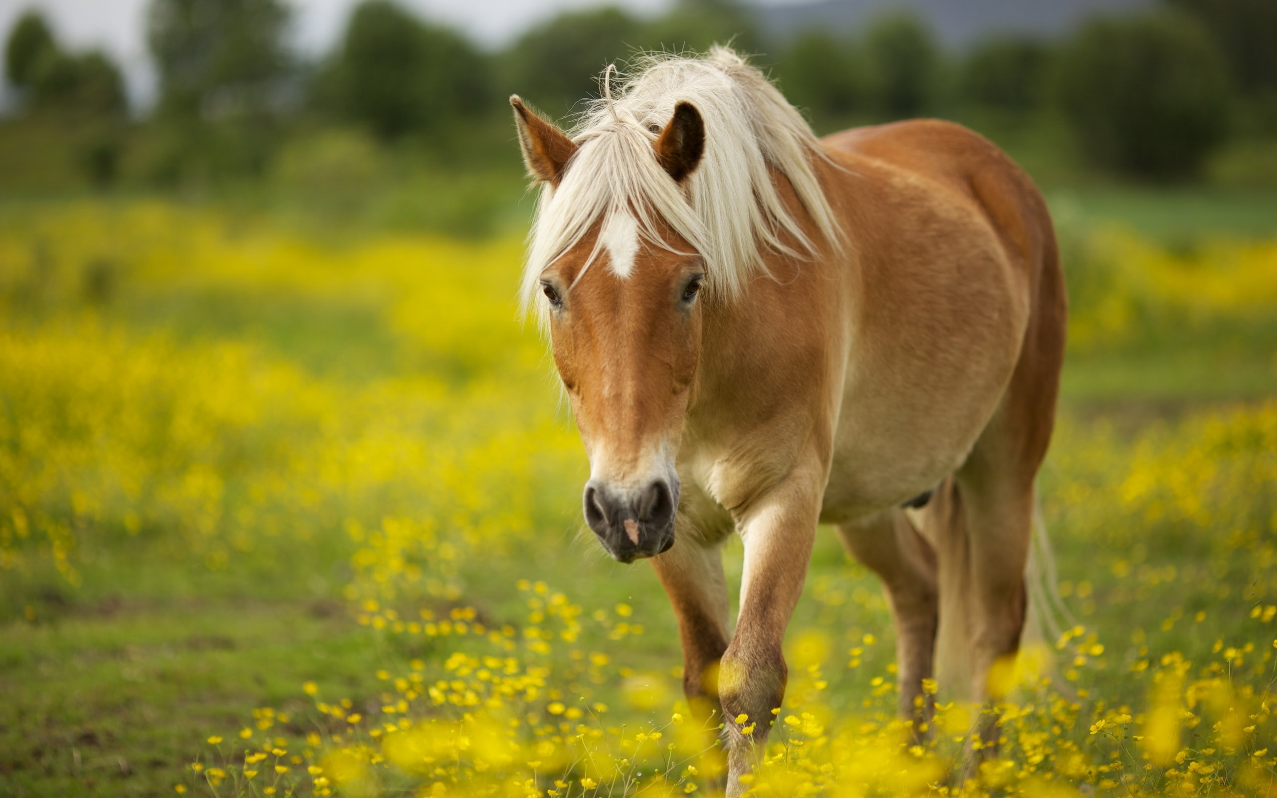 Horse Free