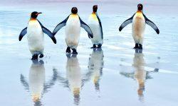 Penguin Free