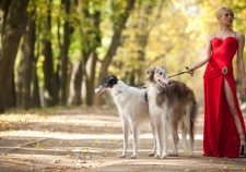 Russian Wolfhound Free